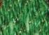 224D green/gold