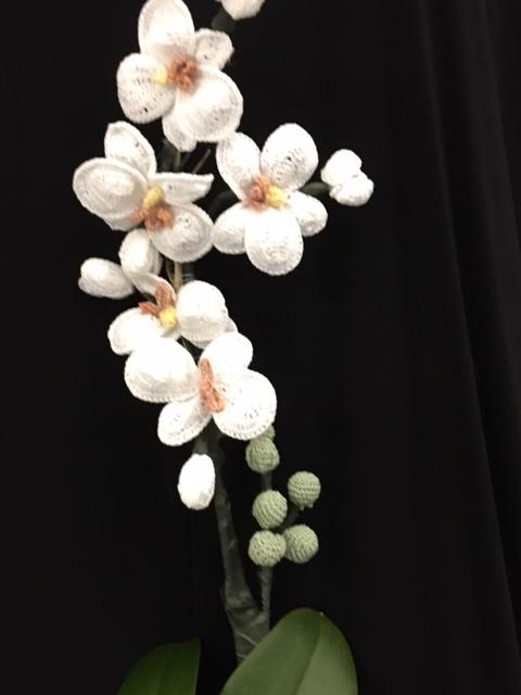 annis superfina orchids