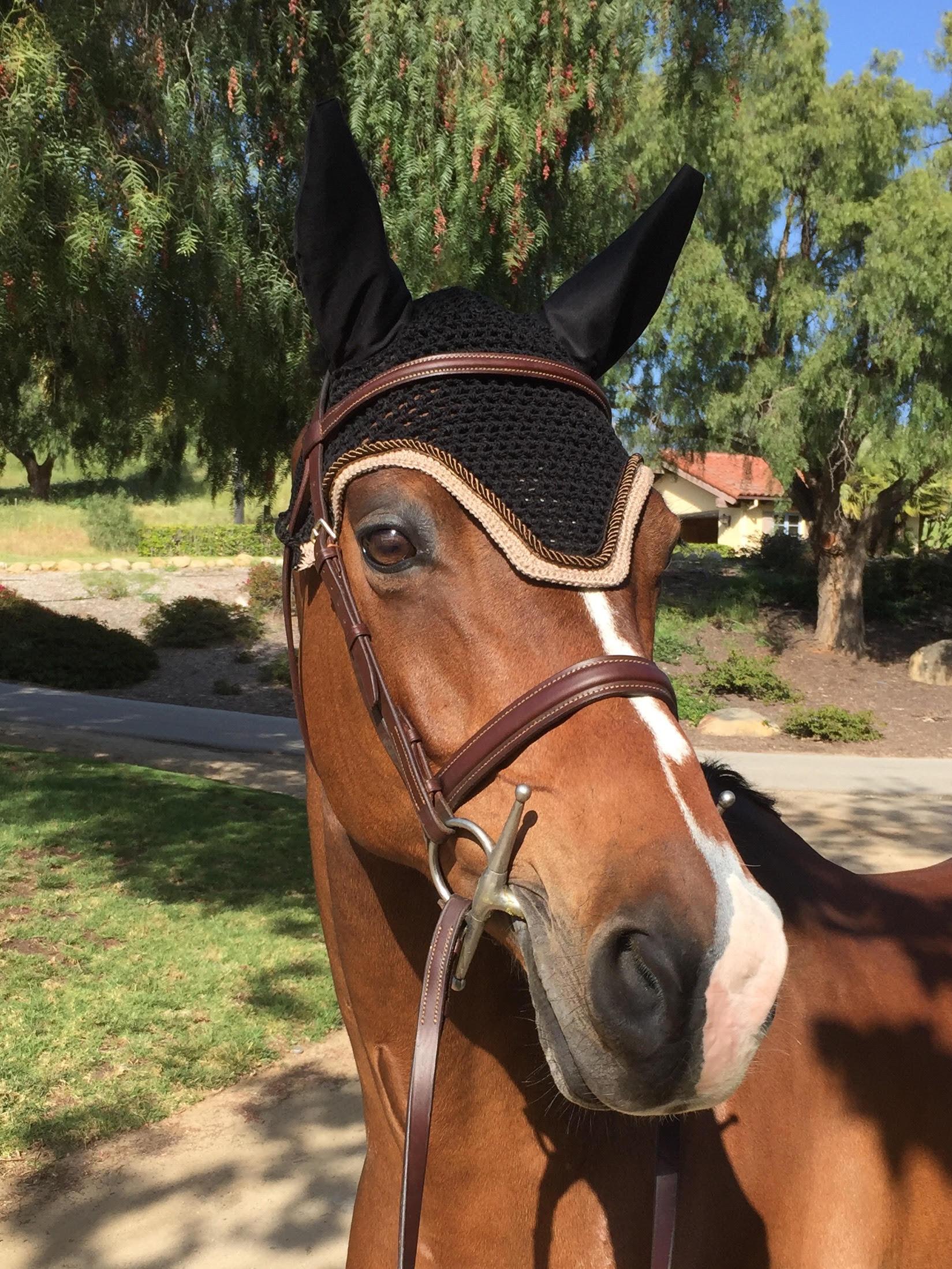 daniela horse bonnet sinfonia