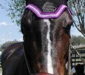 Dale 5 horse jumper