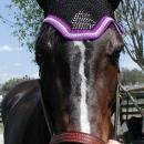 Dale 5 horse jumper (1)