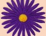 purple yellow flower