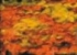 1109 orange